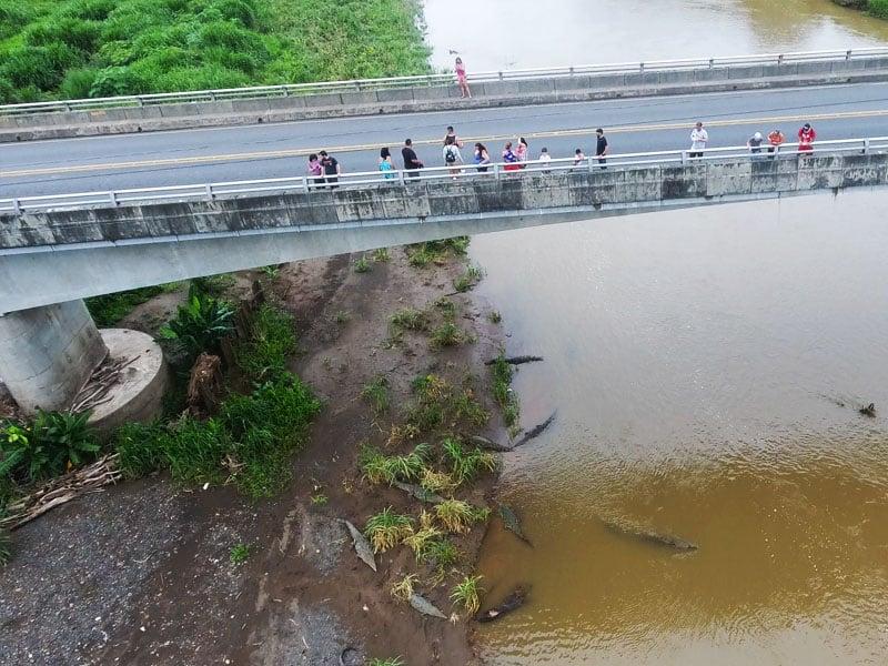Tarcoles Bridge things to do in jaco costa rica